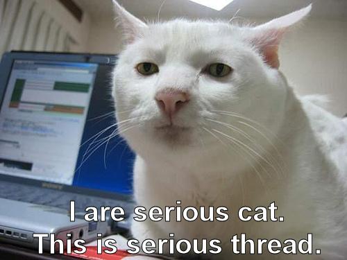 aerroraccessdenied.com_files_images_serious_cat.jpg