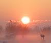 aimg.photobucket.com_albums_v335_Nerelda_miscellanious_SunriseAv.jpg